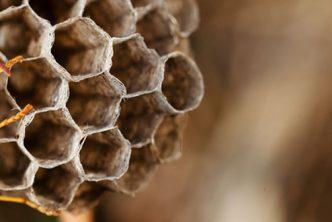 come-allontanare-sicurezza-api-vespe-calabroni-prevenire-ritorno