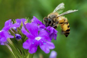 allontanare-api-vespe-calabroni-metodi-green-naturali