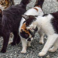 come-allontanare-gatti-randagi-nostro-giardino-metodi-naturali