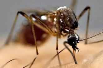 zanzare-quanti-tipi-esistono-quali-sono-piu-comuni-italia