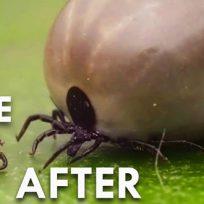 Come Difendersi Zecche Malattia Lyme