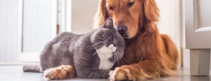 Proteggere Cani Gatti Punture Zecche Cosa Fare Come Rimuovere